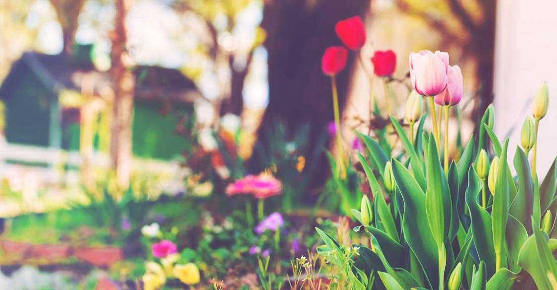 Spring Maintenance 101: Tips for your Home